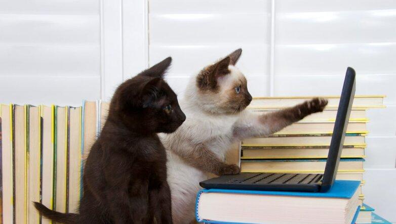 Кошки, котята, коты