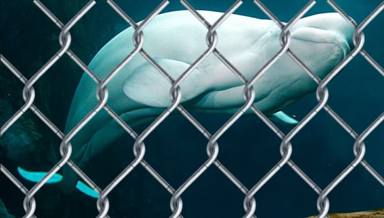 Белуха кит решетка