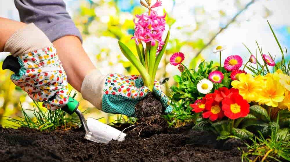 Бег трусцой или садоводство: американские врачи назвали способ избежать депрессии