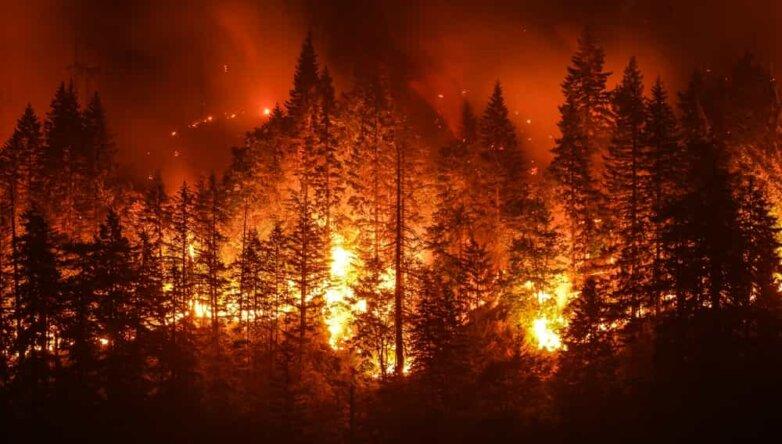 Лесной пожар, огонь, горит лес