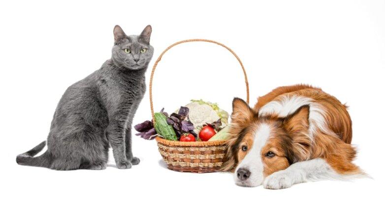 Кошка собака овощи