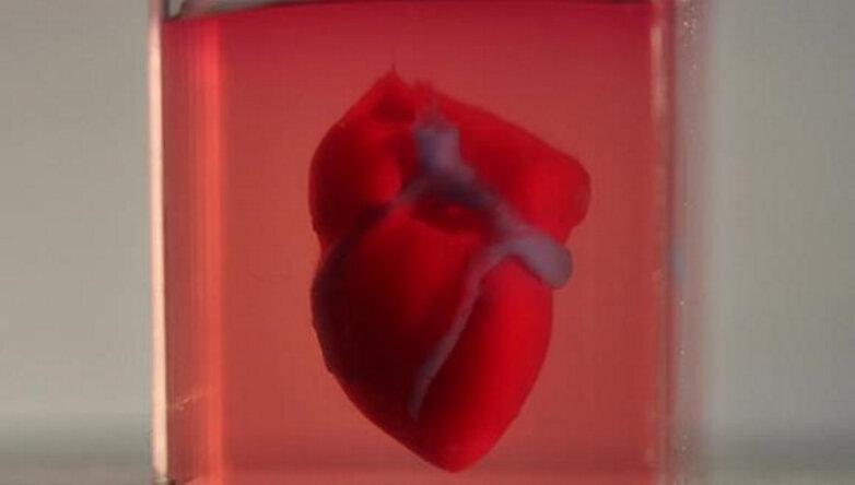 Напечатанное на 3D-принтере сердце