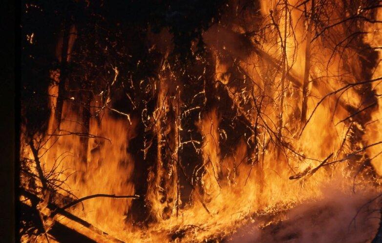 пожар, горит лес