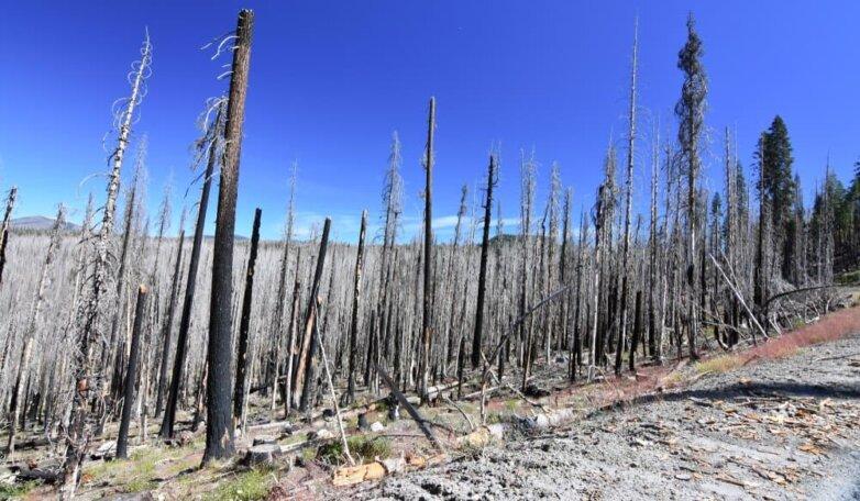 Сгоревший лес, лесной пожар