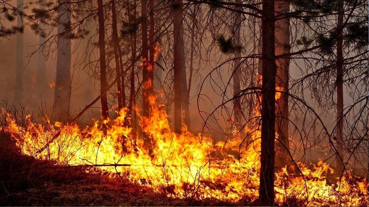Лесной пожар близко