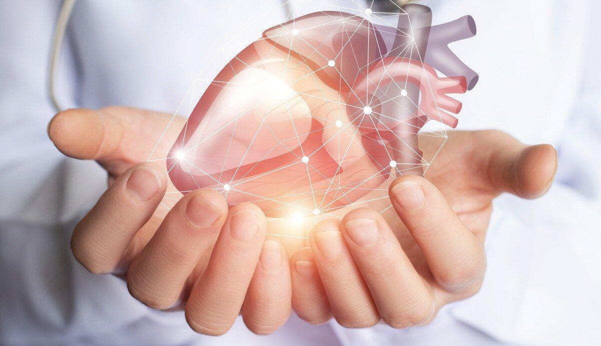 кардиология сердце