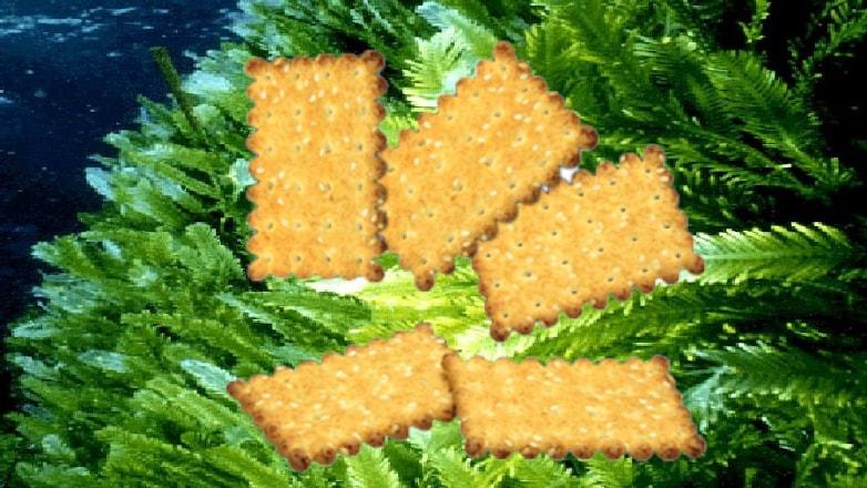 печеньки водоросли