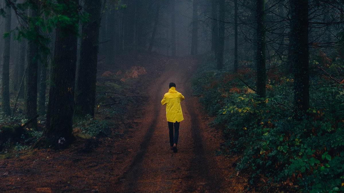 Лес Жёлтый Прогулка Дождевик