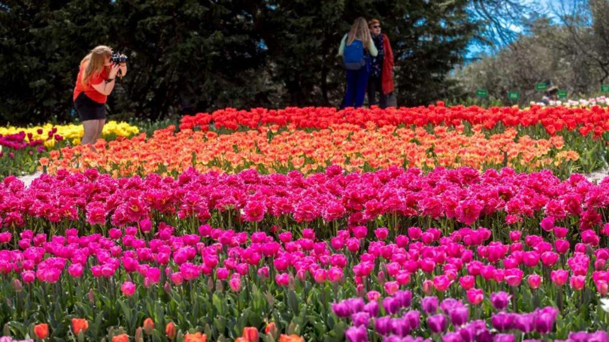 Тюльпаны Парад тюльпанов Крым