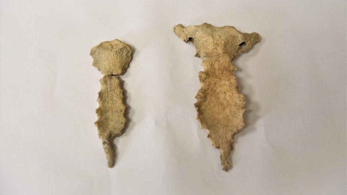 В Херсонесе нашли кости человека