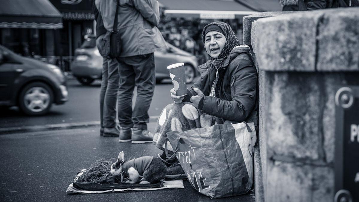 Бездомная и кролик