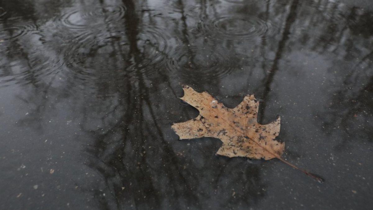 Погода пасмурная дождь лист