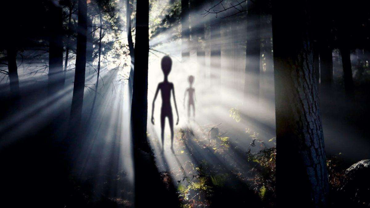 Инопланетяне в лесу