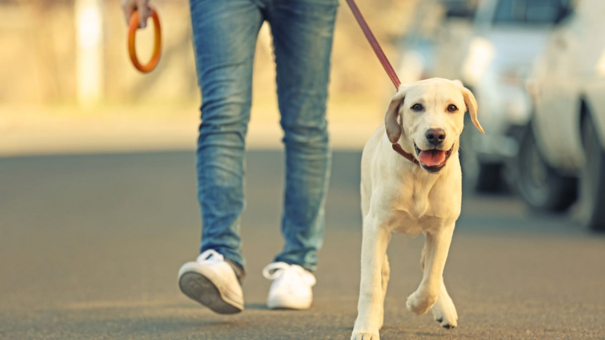 Выгул собаки гулять собака