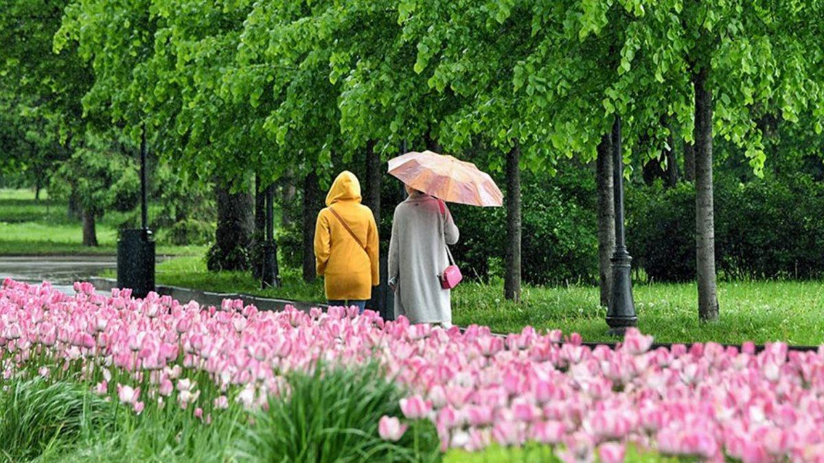 Погода дождь парк