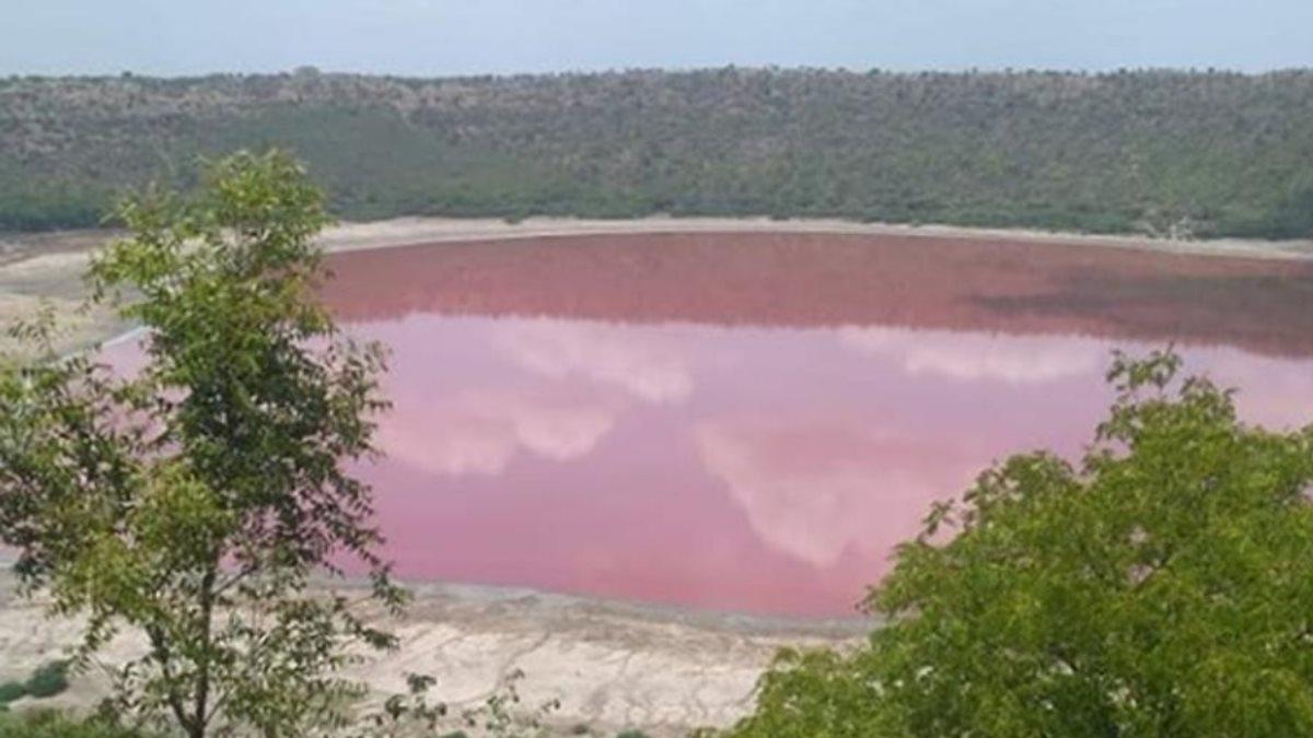 Озеро Лонар в Индии стало розовым