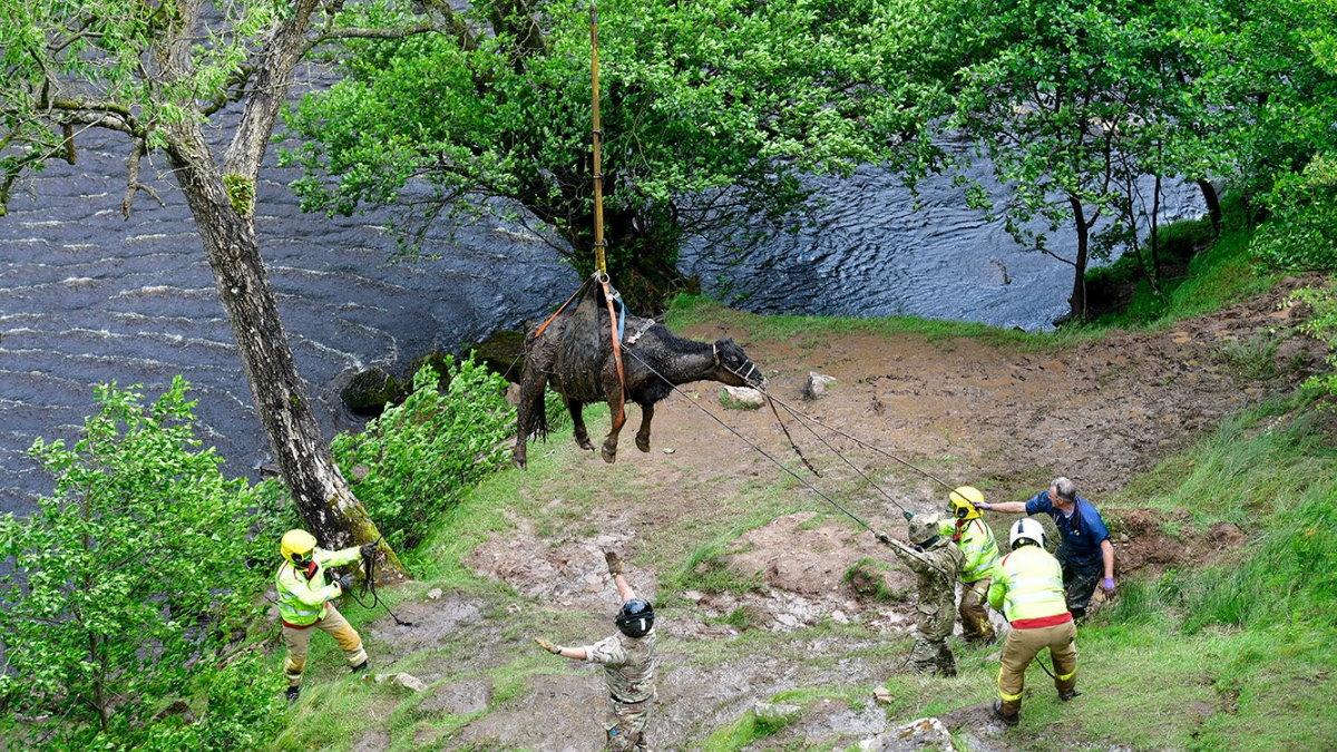 Британские военные вытащили упавшую в водопад корову