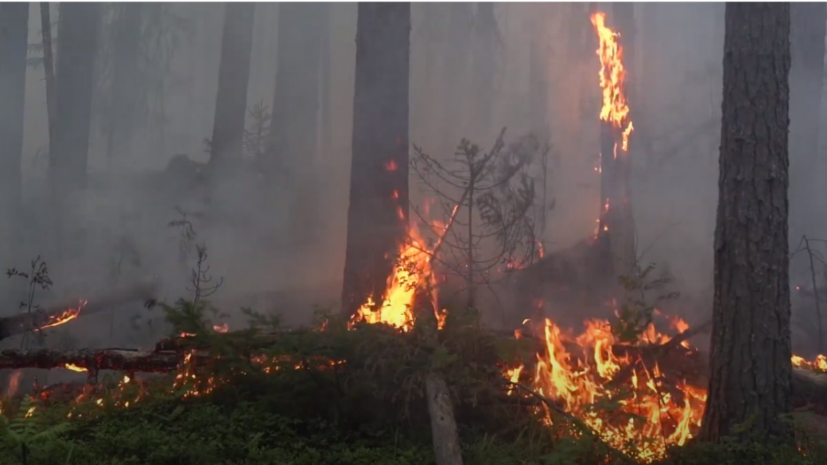 Лесной пожар заповедник