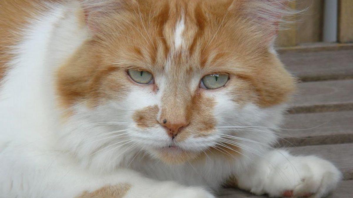 Умер самый старый кот в мире Щебень 31