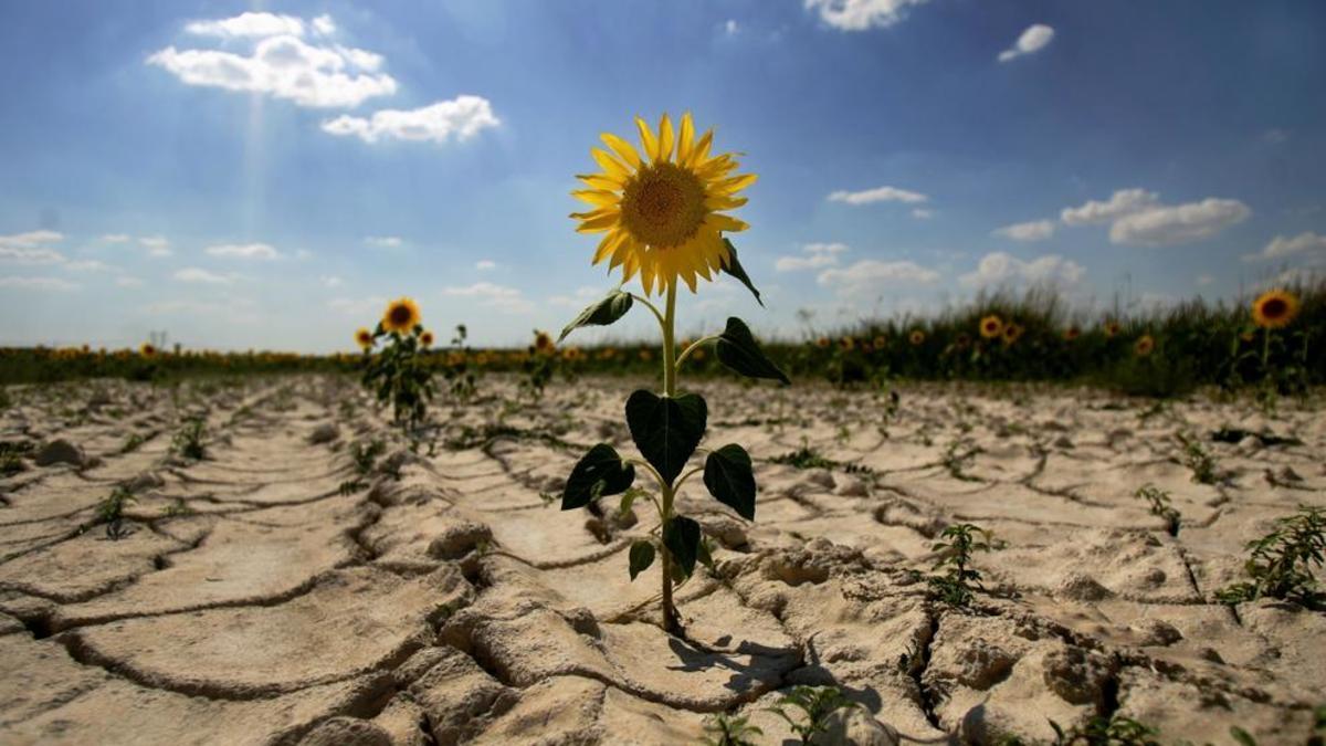 засуха дефицит воды