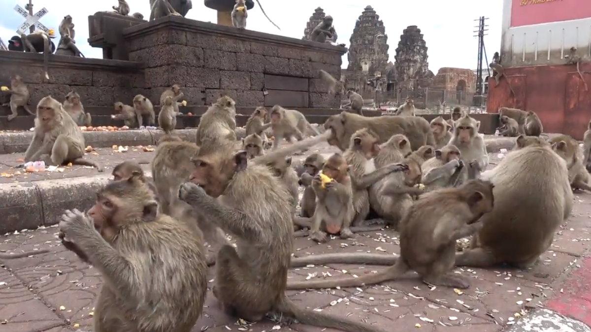 обезьяны много Таиланд