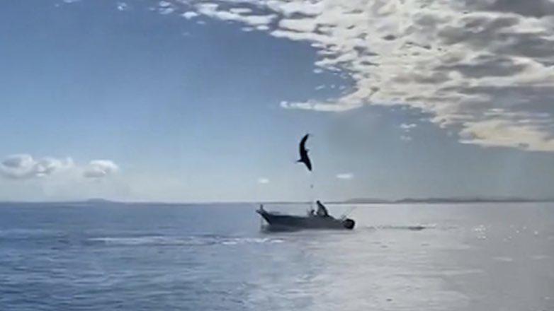прыжок акулы в Австралии