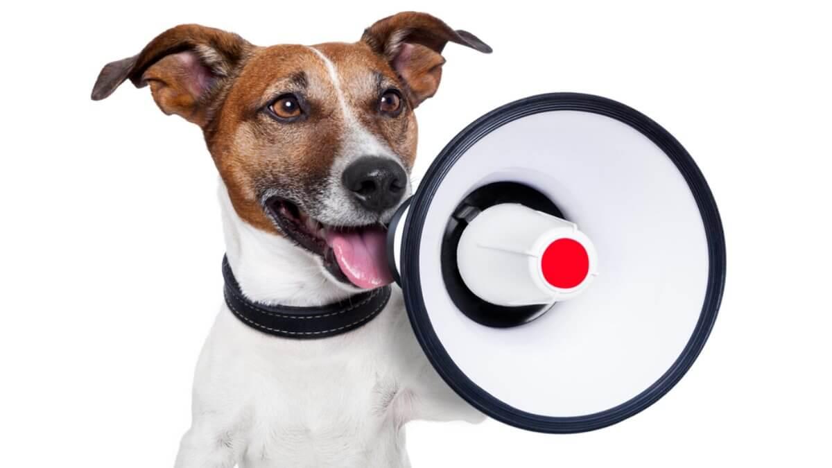 Собака и громкоговоритель мегафон