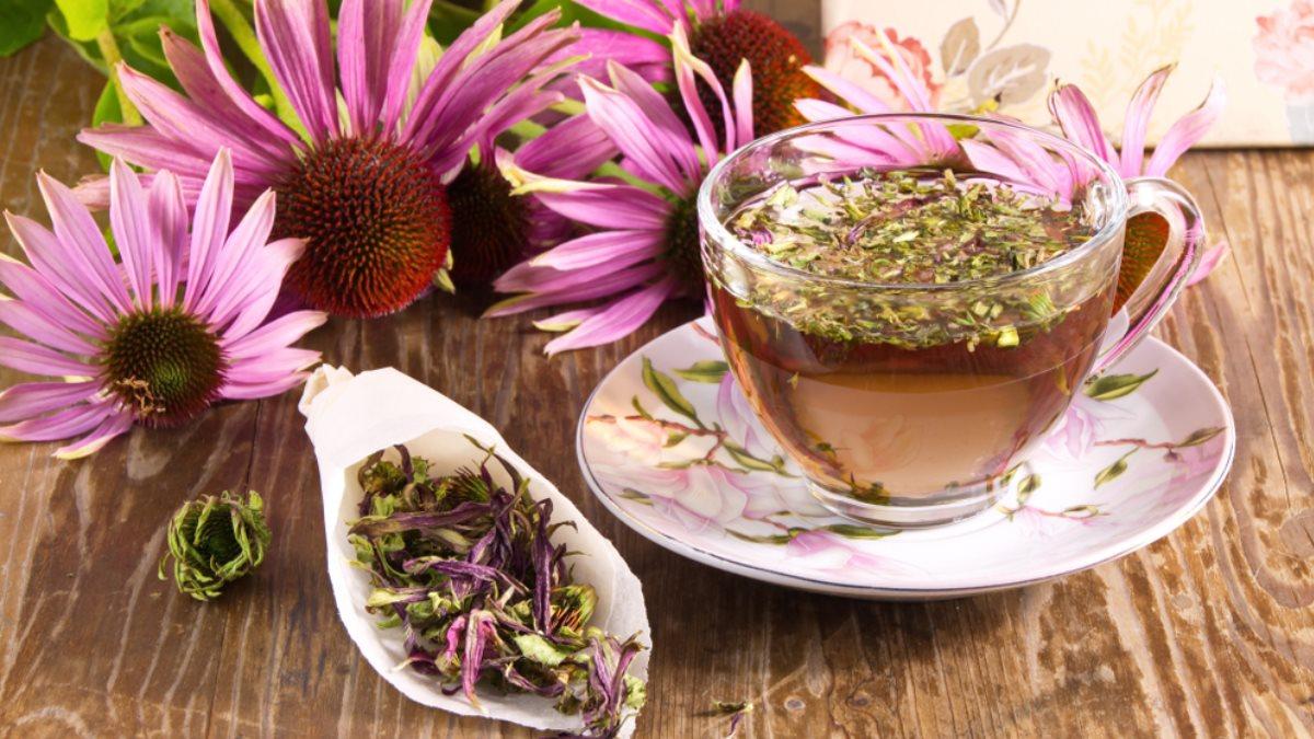 Чайный напиток отвар цветы эхинацея против гриппа один