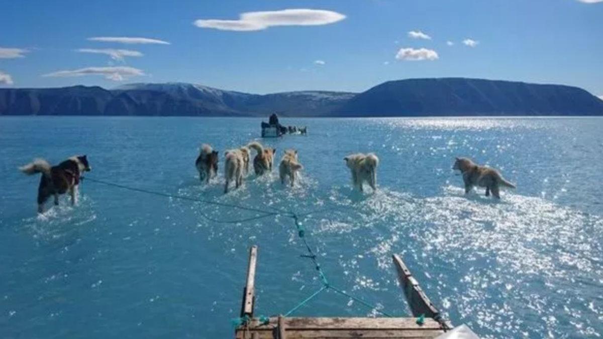 Хаски вынуждены ходить по воде Гренландия