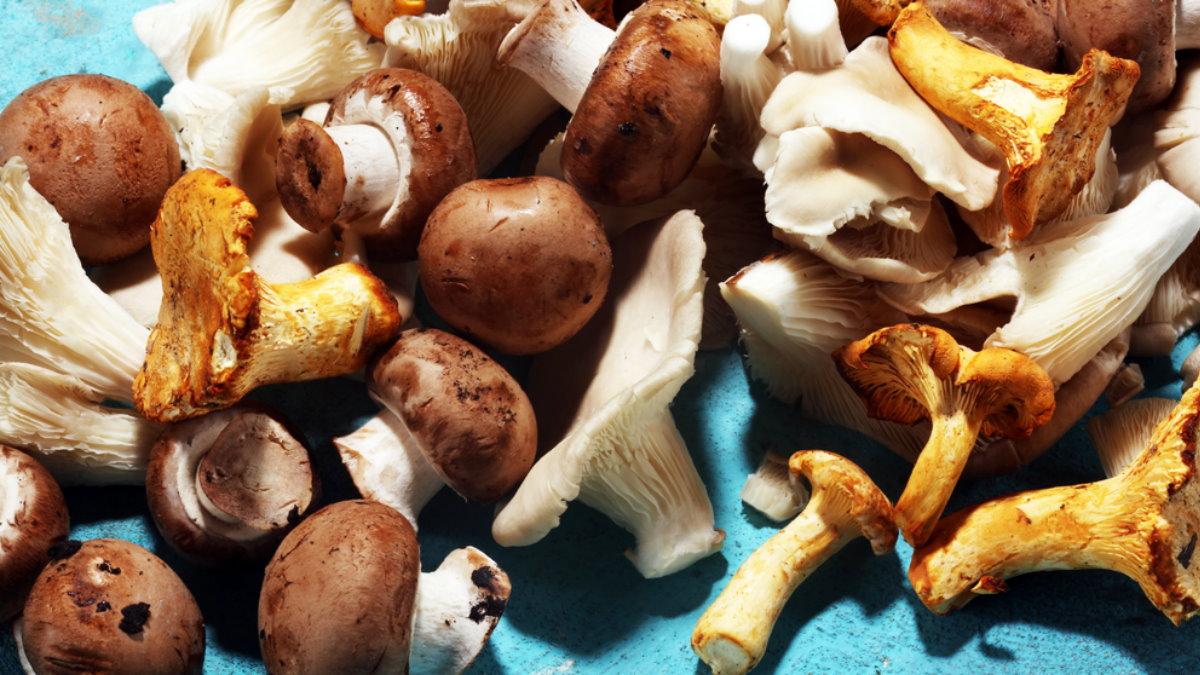 Съедобные грибы синий фон