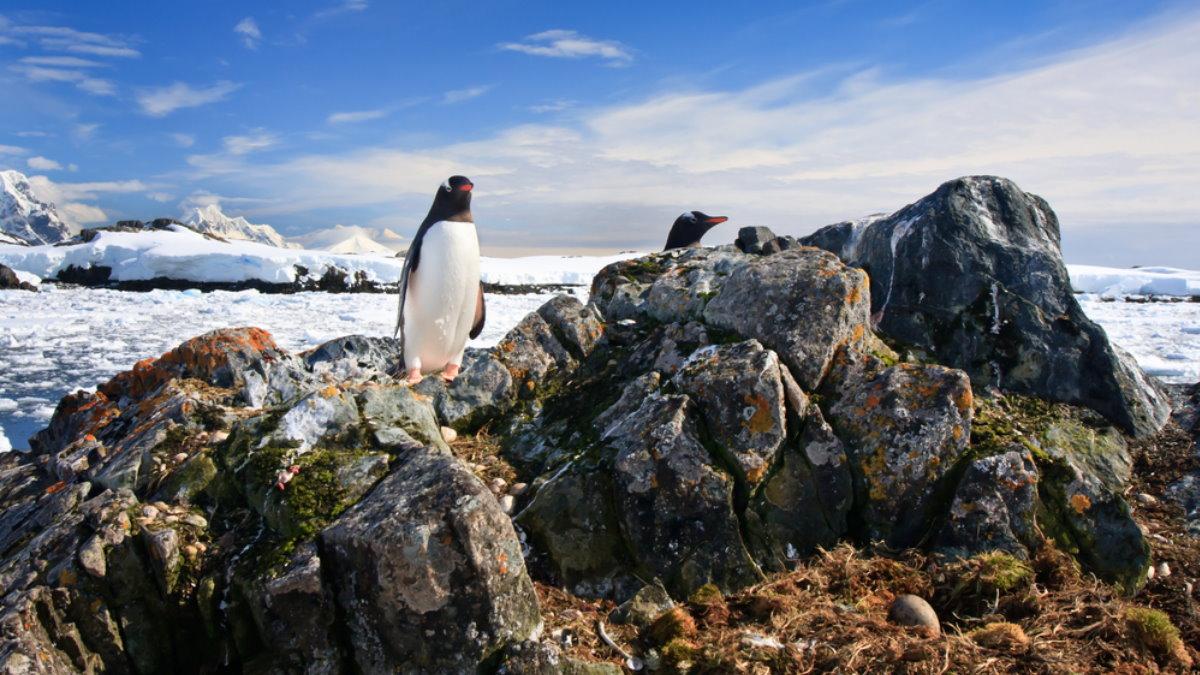 Антарктида пингвины берег