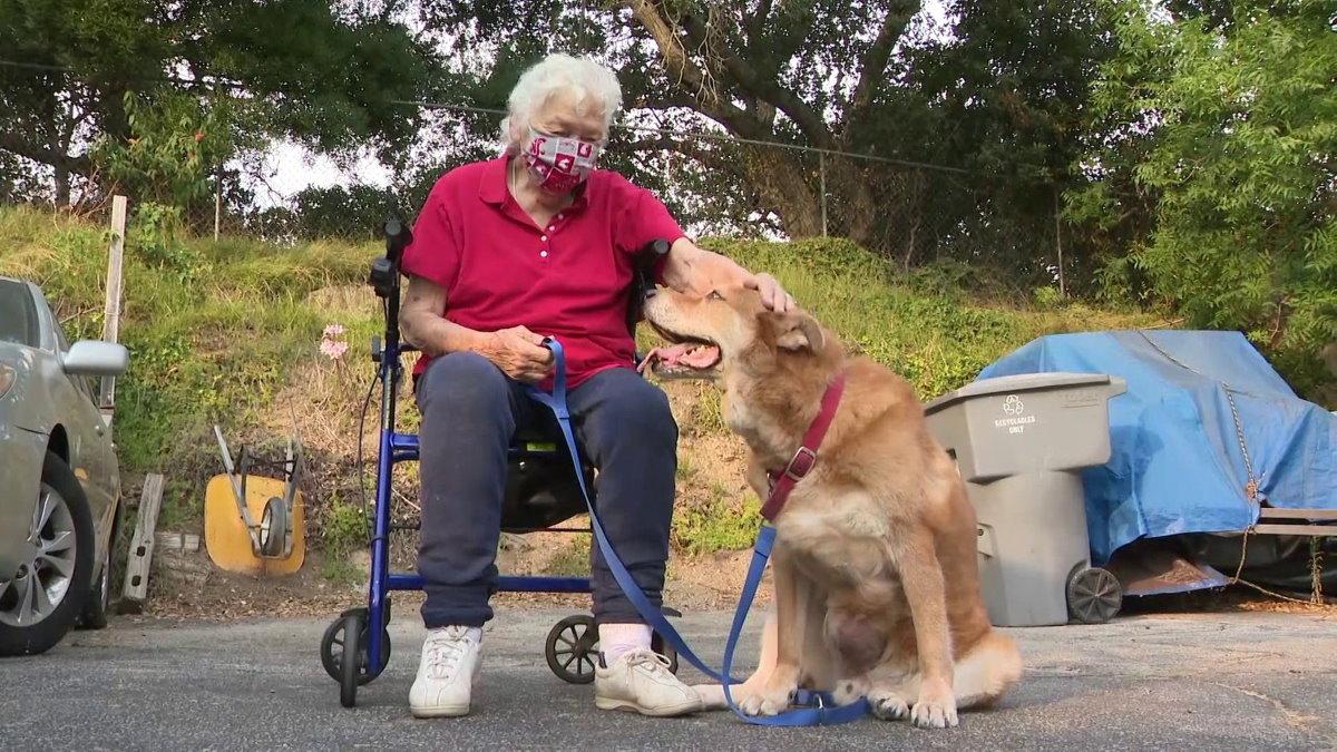 Пёс привел прохожего к попавшей в беду хозяйке