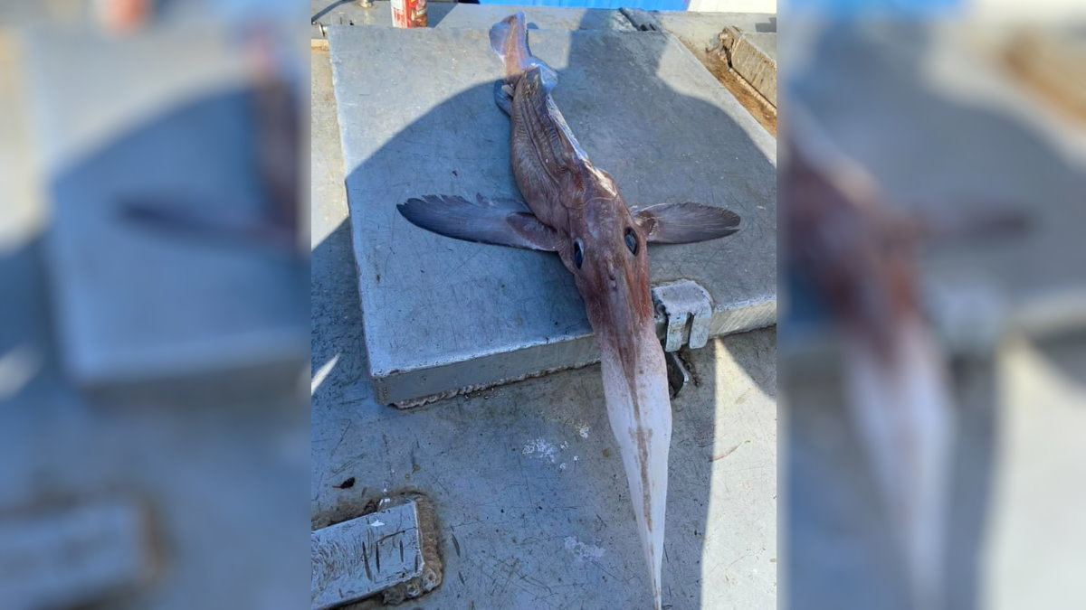 Рыбаки выловили жуткое глубоководное существо