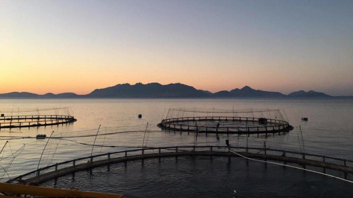 Рыбная ферма лосось