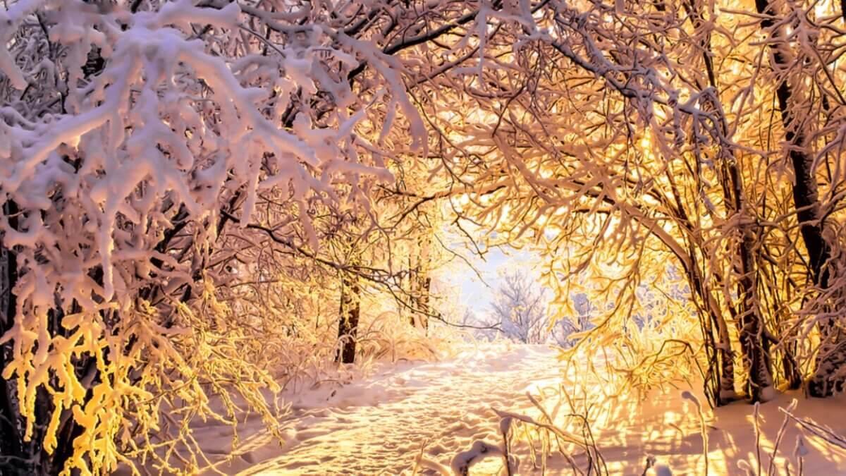 Погода снежная зима солнце два