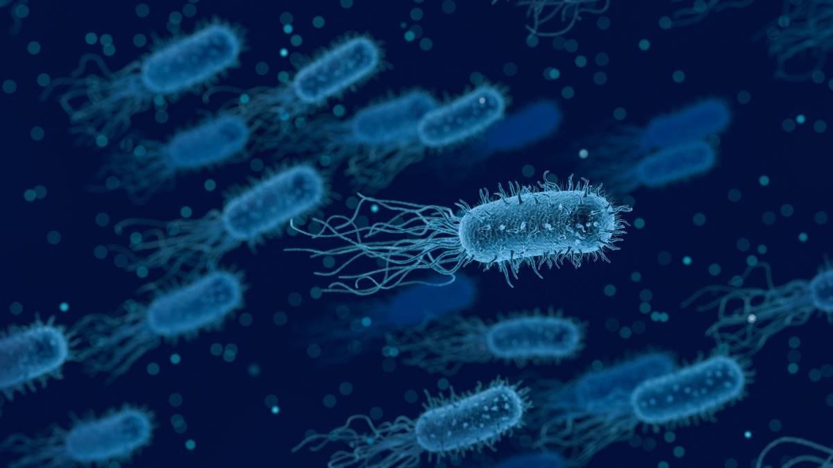 бактерии синие два