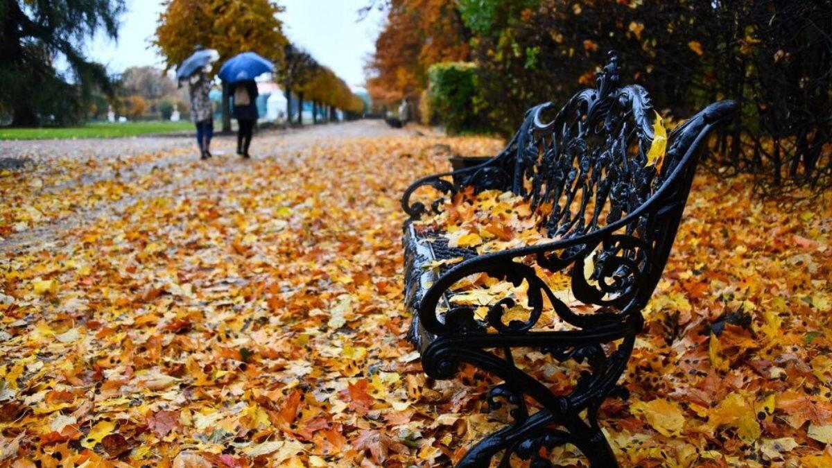 Погода холодная осень дождь листопад