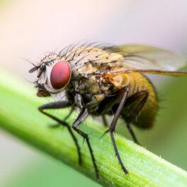 Как избавиться от мух в доме: 3 быстрых способа борьбы с насекомыми