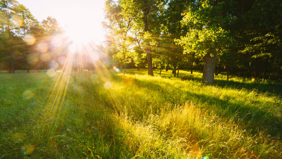 Погода тепло лето солнце бабье