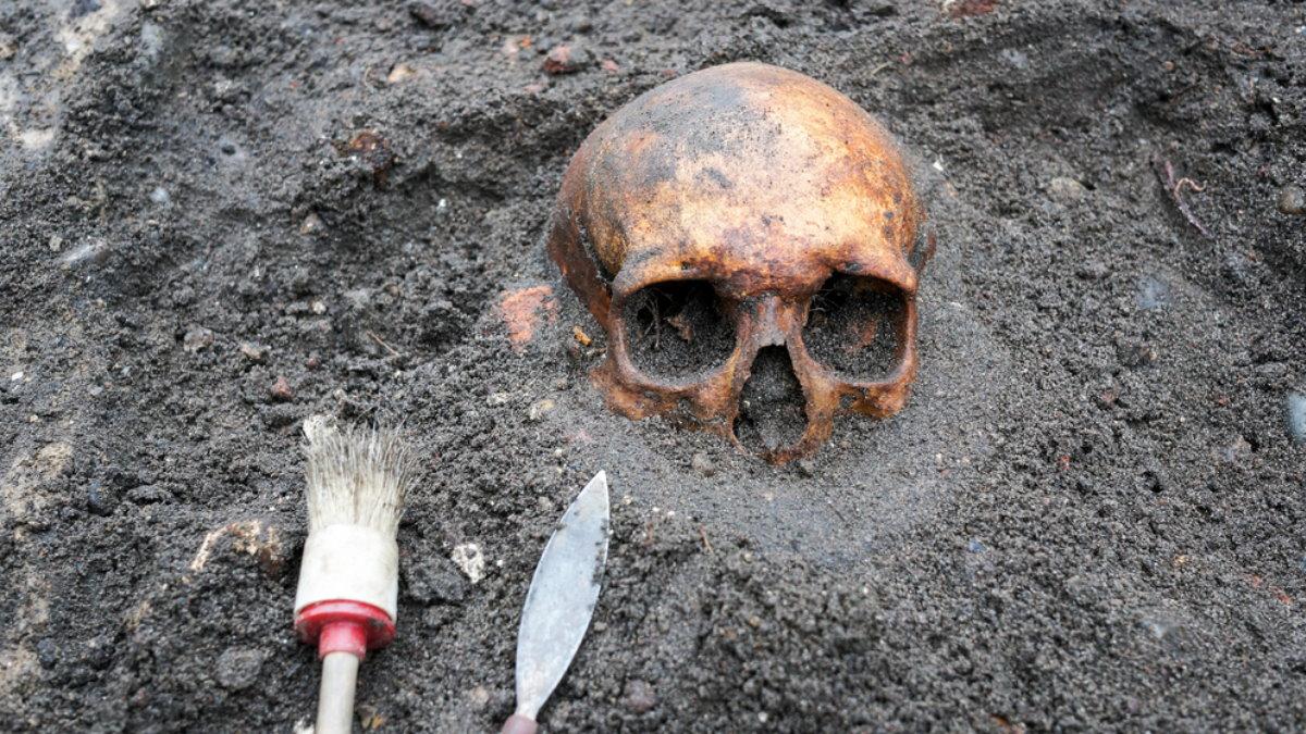 Археология раскопки один