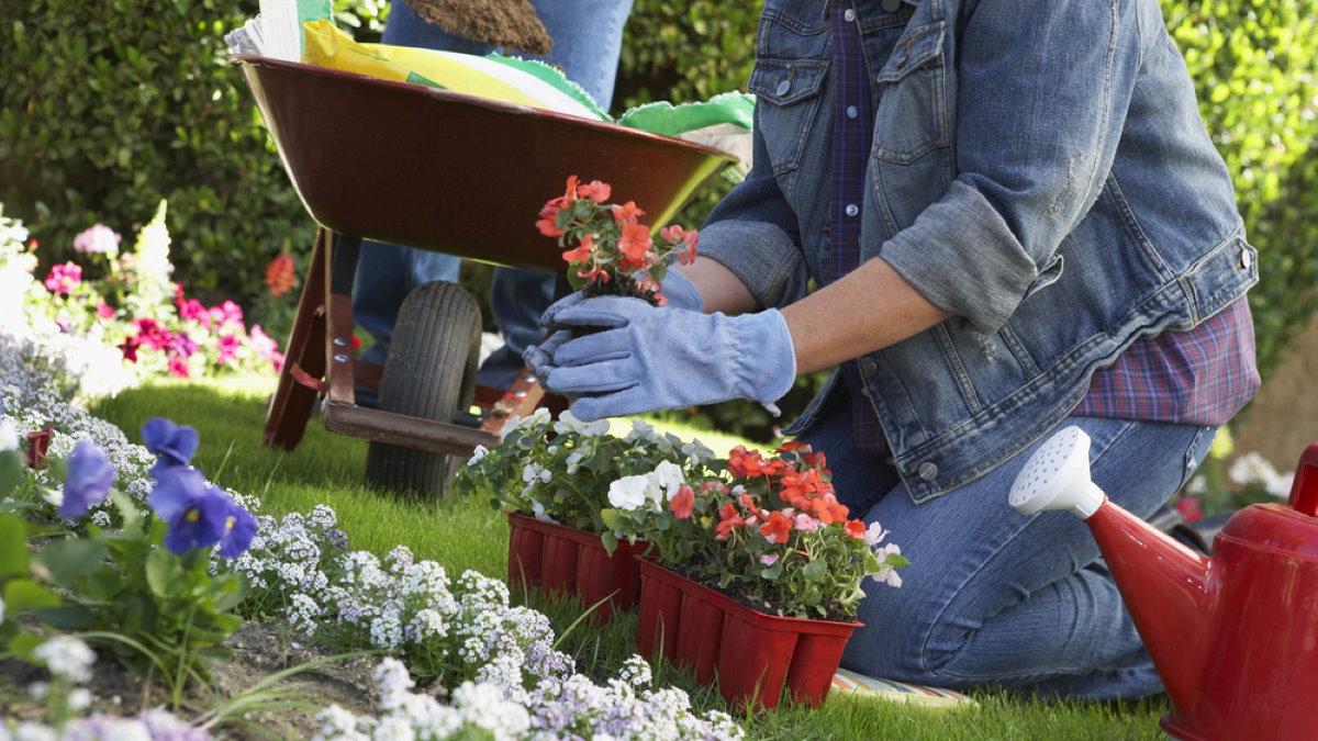 Садоводство садовник сад сажать цветы рассада женщина