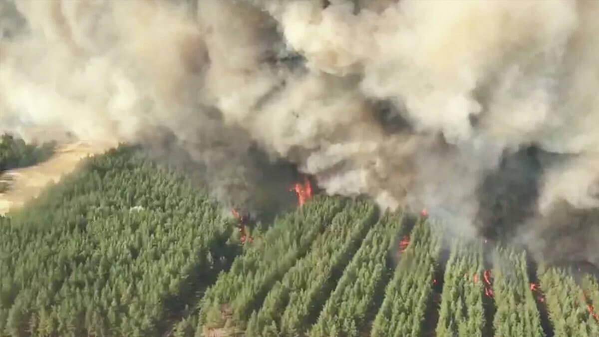 Лесной пожар в Ростовской области в сентябре 2020 года
