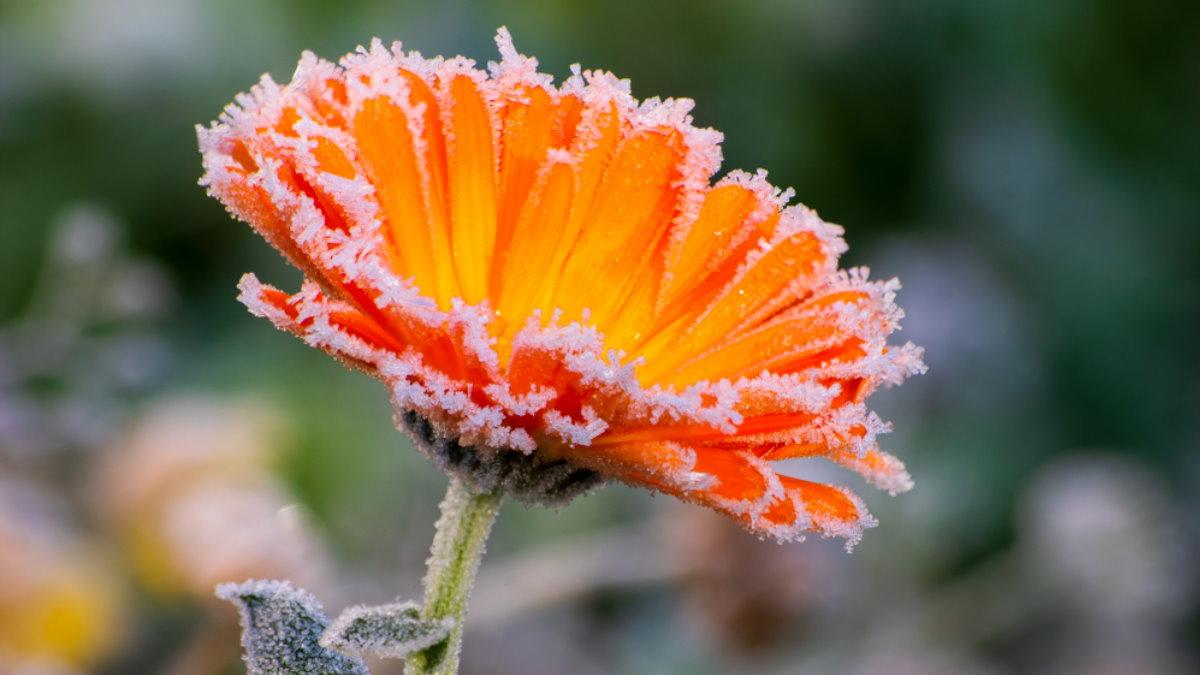 Погода иней заморозки похолодание шесть