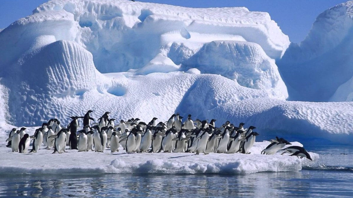 Антарктида Пингвины Адели