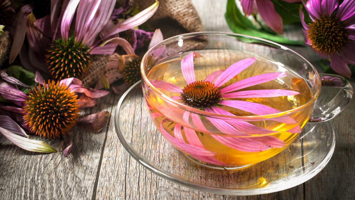 Чайный напиток отвар цветы эхинацея против гриппа два