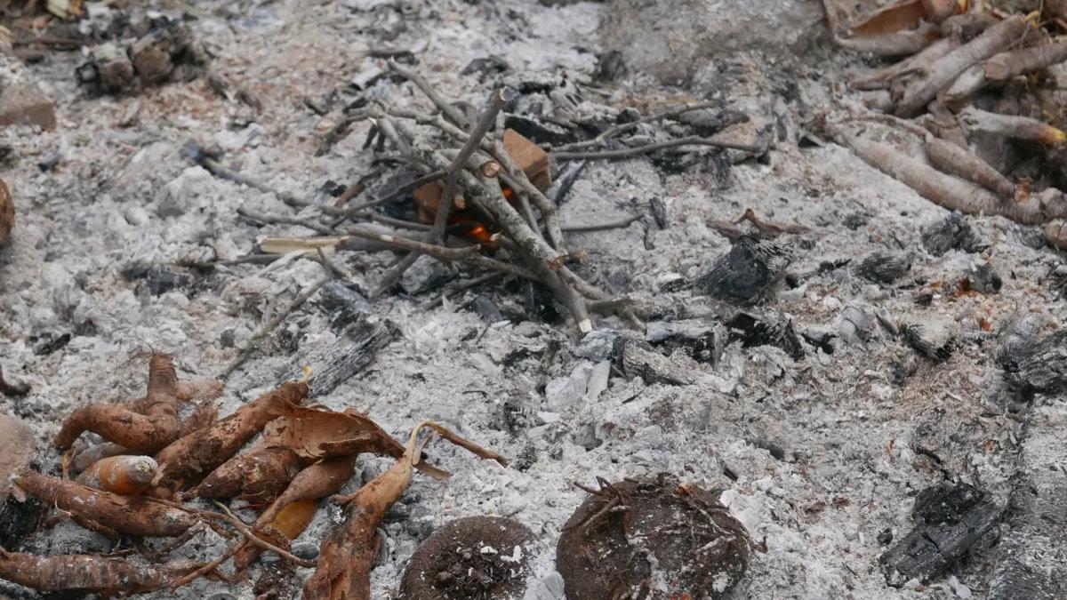 Костёр зола жареные клубни корни