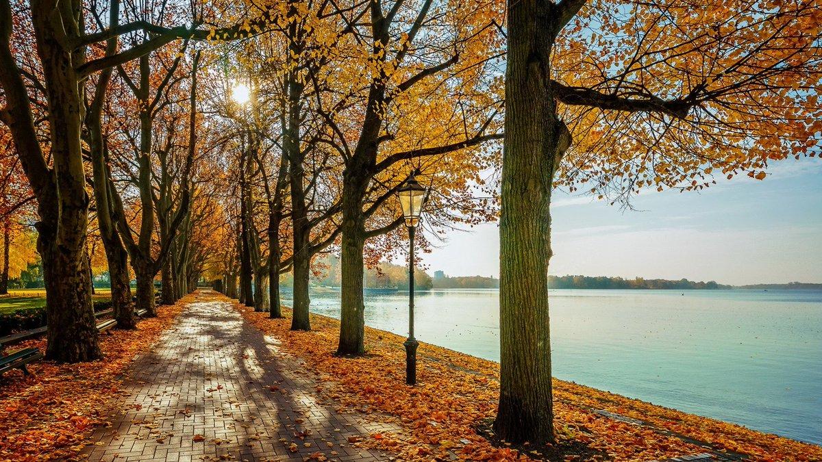 Осень тепло листья деревья