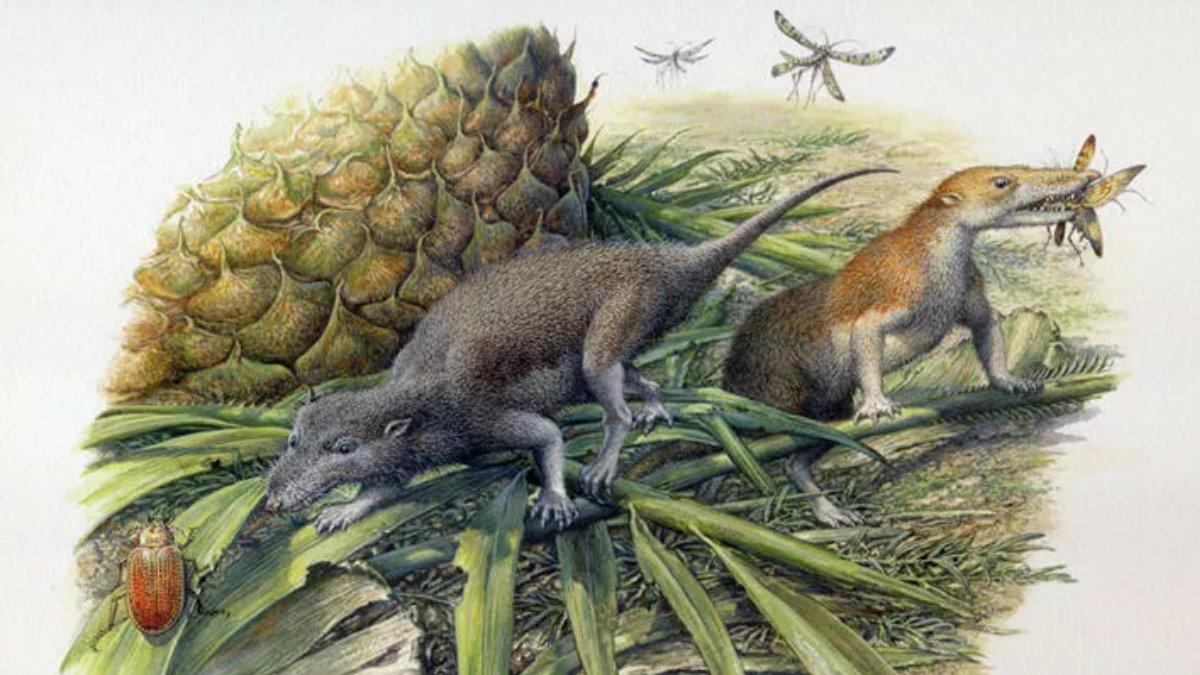 Первые млекопитающие Morganucodon и Kuehneotherium