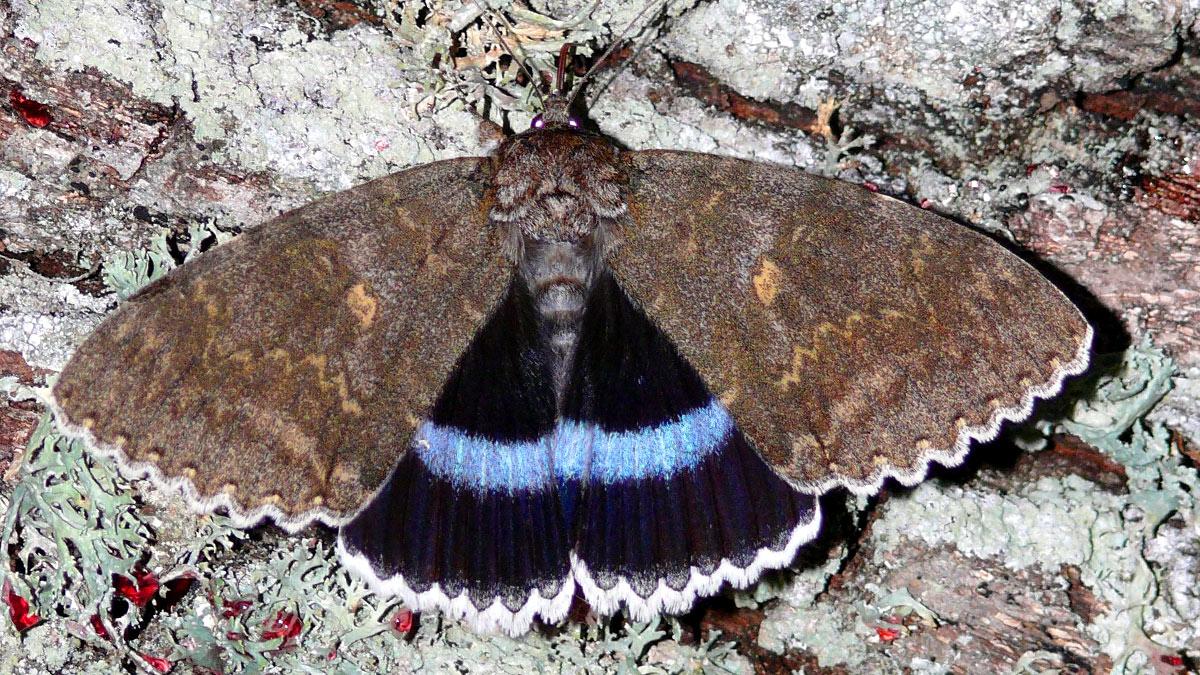 гигантская бабочка из Чернобыля