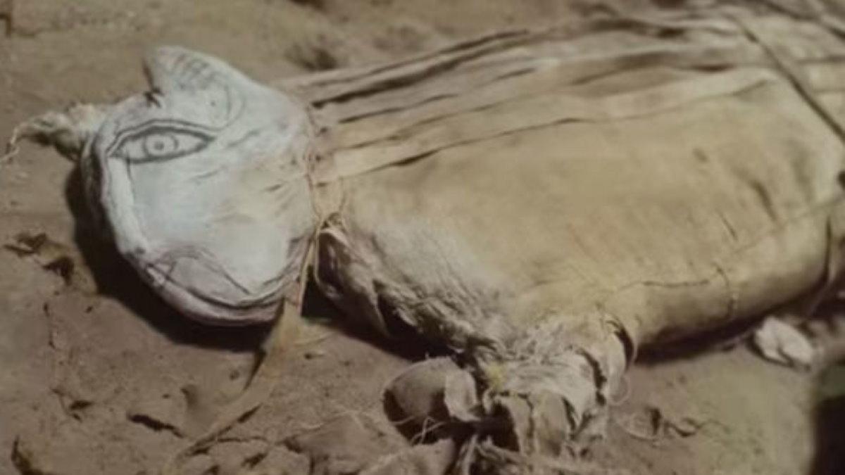 мумифицированное животное в Саккаре